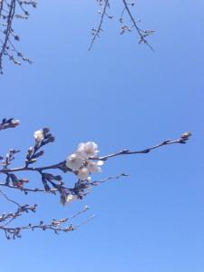 開花2013